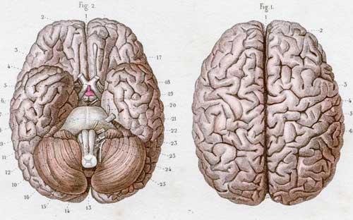 Πώς αποκαθίσταται η λειτουργία του εγκεφάλου μετά τη αφαίρεση του ενός ημισφαιρίου