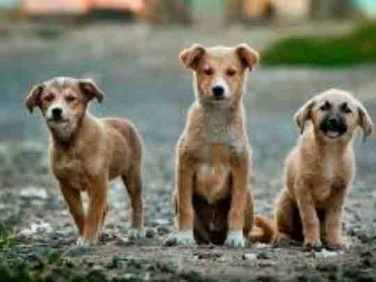 Έρευνα: Οι σκύλοι φαίνεται να μυρίζουν με μεγάλη ακρίβεια τους ανθρώπους με κορονοϊό